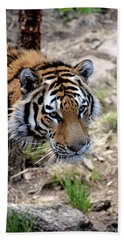 Feline Focus Bath Towel