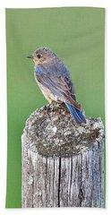 Female Blue Bird Bath Towel