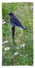 Female Bluebird Hand Towel