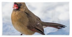 Female Cardinal In Snow Hand Towel