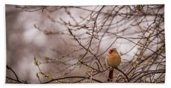 Bath Towel featuring the photograph Female Cardinal In Spring 2017 by Terry DeLuco
