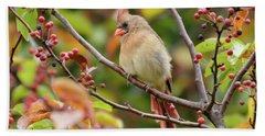 Hand Towel featuring the photograph Female Cardinal In The Berries by Kerri Farley