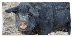 Bath Towel featuring the photograph Female Hog by James BO Insogna