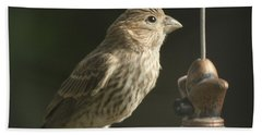 Female House Finch On Feeder Hand Towel