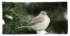 Female House Finch On Snow Hand Towel