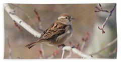 Female House Sparrow Bath Towel
