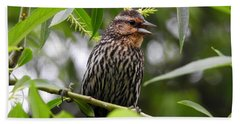 Female Redwinged Blackbird Bath Towel