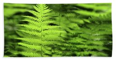 Ferns Stony Brook New York Hand Towel