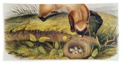 Ferret Hand Towel by John James Audubon