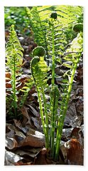 Fiddlehead Ferns Hand Towel by Joy Nichols
