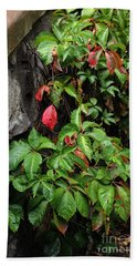 Hand Towel featuring the photograph First Signs Of Fall Approaching by Natalie Ortiz