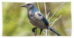 Florida Scrub Jay Hand Towel by Arthur Dodd