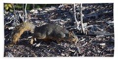 Squirrel Pprh Woodland Park Co Hand Towel