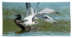 Forster's Tern 5497-092117-2 Hand Towel