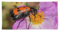 Bath Towel featuring the photograph Four-spotted Blister Beetle - Mylabris Quadripunctata by Jivko Nakev