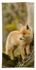 Fox Kit In A Tree Hand Towel