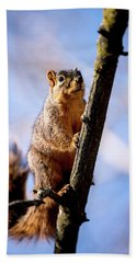 Fox Squirrel's Last Look Hand Towel