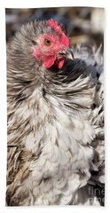 Frizzled Cochin Hen Hand Towel