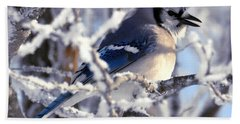 Frosty Morning Blue Jay Bath Towel