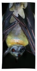 Hand Towel featuring the photograph Fruit Bat by Anthony Jones