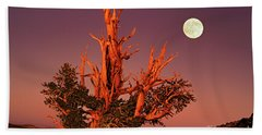 Full Moon Behind Ancient Bristlecone Pine White Mountains California Bath Towel