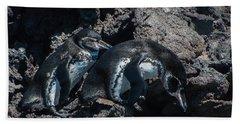 Galapagos Penguins  Bartelome Bartholomew Island Galapagos Islands Bath Towel