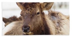 Hand Towel featuring the photograph Gaze From A Bull Elk by Jeff Swan