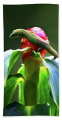 Hand Towel featuring the photograph Gecko #3 by Anthony Jones