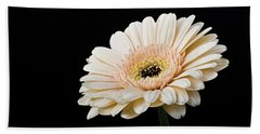 Hand Towel featuring the photograph Gerbera Daisy On Black II by Clare Bambers