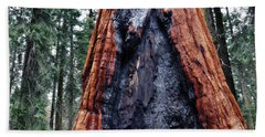 Bath Towel featuring the photograph Giant Sequoia by Kyle Hanson