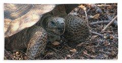 Giant Tortoise At Urbina Bay On Isabela Island  Galapagos Islands Hand Towel