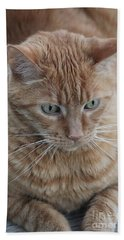 Ginger Cat Hand Towel
