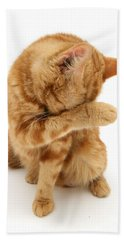 Ginger Cat Grooming Hand Towel
