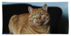 Hand Towel featuring the photograph Ginger Marmalade Cat by Nareeta Martin