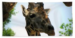 Bath Towel featuring the photograph Giraffe by Beth Vincent