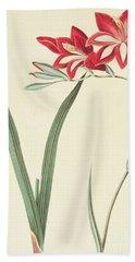 Gladiolus Cardinalis Bath Towel