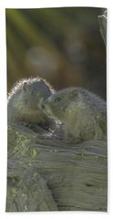 Golden Bellied Marmot Bath Towel