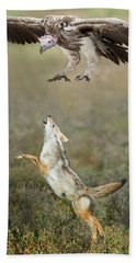 Golden Jackal, Canis Aureus, Leaping At Vulture Hand Towel