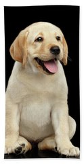 Golden Labrador Retriever Puppy Isolated On Black Background Bath Towel