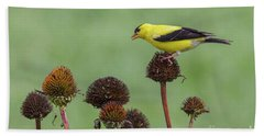 Goldfinch And Coneflowers Bath Towel