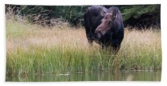 Bath Towel featuring the photograph Grand Teton Moose by Jennifer Ancker