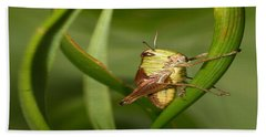 Hand Towel featuring the photograph Grasshopper by Jouko Lehto