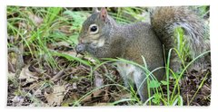 Gray Squirrel Eating Bath Towel