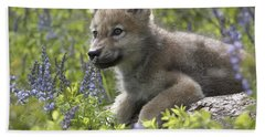 Gray Wolf Canis Lupus Pup Amid Lupine Hand Towel