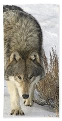 Gray Wolf Hand Towel