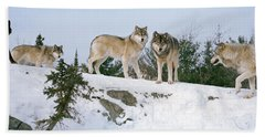 Gray Wolves Canis Lupus In A Forest Hand Towel