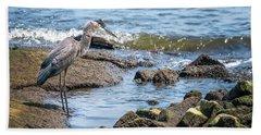 Great Blue Heron Fishing On The Chesapeake Bay Hand Towel