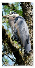 Great Blue Heron In A Tree Hand Towel