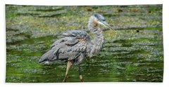 Great Blue Heron In Pond Hand Towel