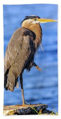 Great Blue Heron On The Chesapeake Bay Hand Towel